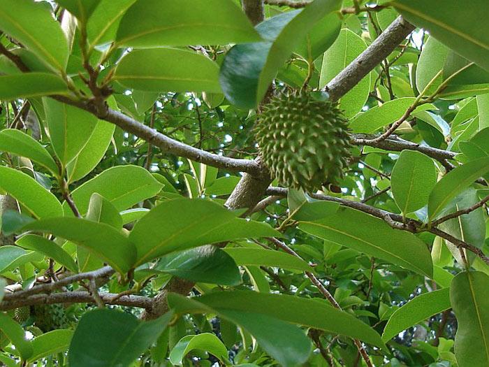 San Go Tropical Fruit Nursery